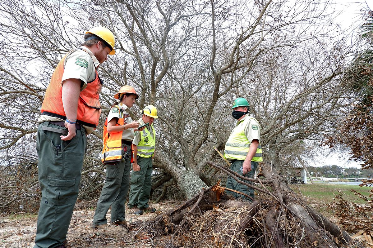 Urban Forest Strike Team member assesses a damaged tree